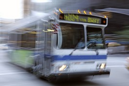 Bus Riders and Budget Bozos