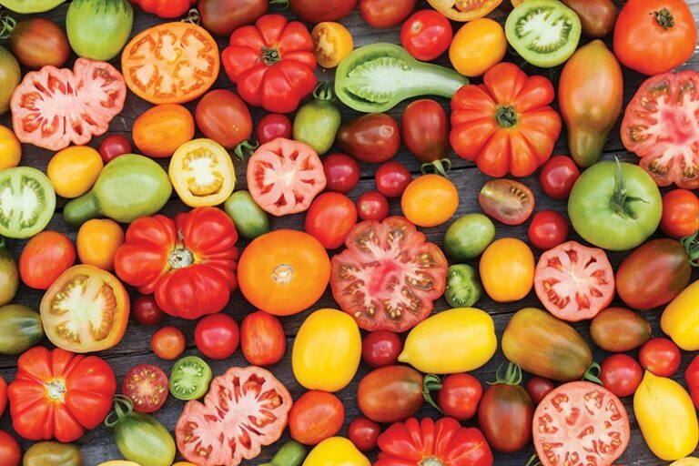 Rainbows of Tomatoes