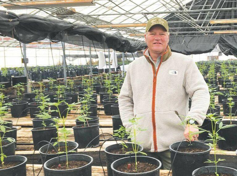 Cannabis Growers Revive the Hessel Grange