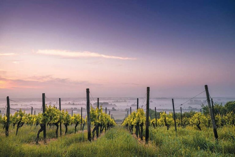Local Wineries Survive and Thrive Despite Fires