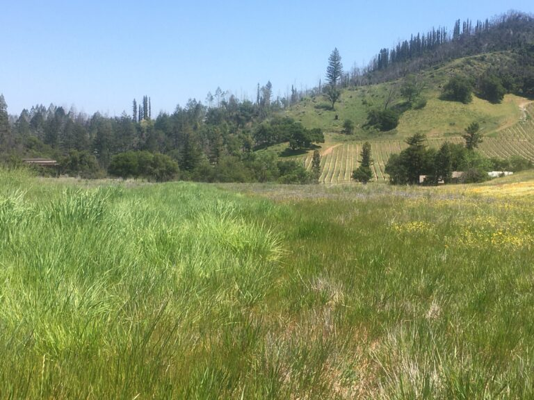 Pepperwood Preserve Officials Consider Drought's Effect on Fire Risk